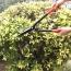 Garden Steel Hedge Shear